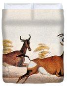 Sassaby And Hartebeest, Duvet Cover