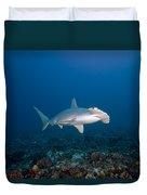 Scalloped Hammerhead Shark Duvet Cover