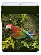 Scarlet Macaw Ara Macao Adult Perching Duvet Cover