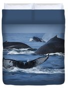 School Of Humpback Whales Duvet Cover