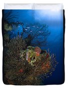 Sea Fan Seascape, Belize Duvet Cover