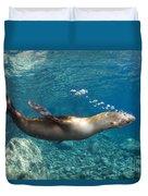 Sea Lion Blowing Bubbles, Los Islotes Duvet Cover