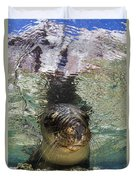 Sea Lion Portrait, Los Islotes, La Paz Duvet Cover by Todd Winner