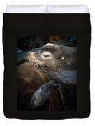 Sea Lion Duvet Cover