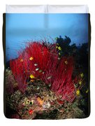 Sea Whips And Soft Coral, Fiji Duvet Cover