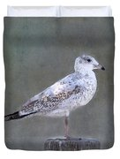 Seagull Duvet Cover by Betty LaRue