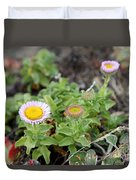 Seaside Fleabane Flowers Duvet Cover