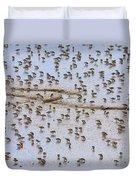 Semipalmated Sandpiper Calidris Pusilla Duvet Cover