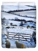 Sheep, Ireland Sheep And A Farm During Duvet Cover