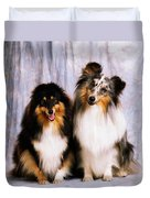 Shetland Sheepdogs Portrait Of Two Dogs Duvet Cover