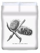 Silver Banksia Seeds Duvet Cover