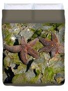 Simply Starfish Duvet Cover