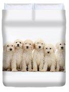 Six Labradoodle Pups Duvet Cover