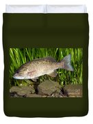 Smallmouth Bass Micropterus Dolomieu Duvet Cover