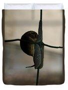 Snail On The Fence Duvet Cover