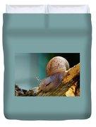 Snail Traversing Duvet Cover
