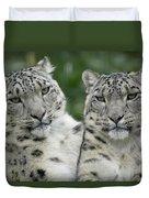 Snow Leopard Pair Sitting Duvet Cover