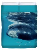 Southern Right Whale Australia Duvet Cover