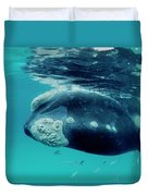 Southern Right Whale Eubalaena Duvet Cover