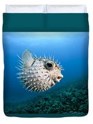 Spotted Porcupinefish Duvet Cover