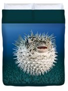 Spotted Porcupinefish IIi Duvet Cover by Dave Fleetham