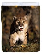 Stalking Mountain Lion Duvet Cover
