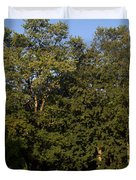 Stand Of Sugar Maple Trees Duvet Cover