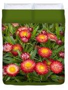 Strawflower Helichrysum Sp Red Variety Duvet Cover
