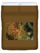 Striated Frogfish, North Sulawesi Duvet Cover