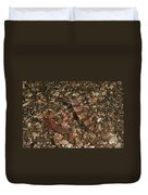 Striated Goby And Blind Shrimp, North Duvet Cover