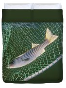 Striped Bass In Net.  The Fish Duvet Cover