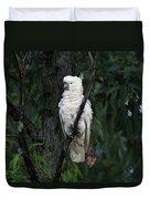 Sulphur Crested Cockatoo  Duvet Cover