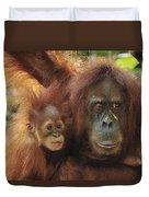 Sumatran Orangutan Pongo Abelii Mother Duvet Cover