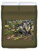 Sunstar Oak Duvet Cover
