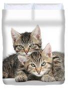 Tabby Kittens Cuddling Duvet Cover