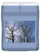 Tall Trees Reaching For A Blue Sky Duvet Cover