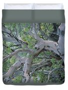 Texas Madrone Tree Limbs Duvet Cover