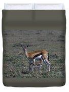 Thomson Gazelle And Newborn Calf Duvet Cover