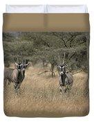 Three Beisa Oryxes In Kenyas Samburu Duvet Cover