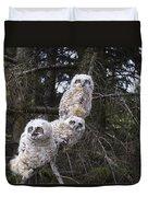 Three Great Horned Owl Bubo Virginianus Duvet Cover
