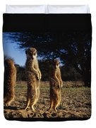 Three Meerkats With Paws Poised Neatly Duvet Cover