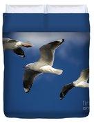 Three Silver Gulls Duvet Cover
