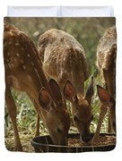Three White-tailed Deer Fawns Duvet Cover