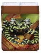 Tigers Treefrog Hyloscirtus Tigrinus Duvet Cover