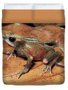 Toad Atelopus Senex On A Leaf Duvet Cover