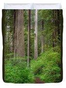 Trail Through Redwoods Duvet Cover