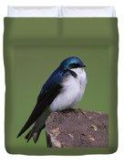 Tree Swallow Duvet Cover