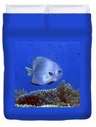Tropical Fish Bat-fish Duvet Cover