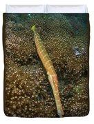 Trumpet Fish, Lembeh Strait, Bitung Duvet Cover by Mathieu Meur