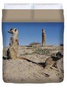 Two Adult Meerkats Suricata Suricatta Duvet Cover